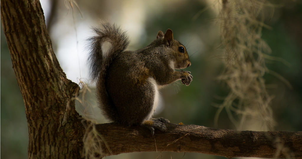 Squirrel Snack! by rickster549