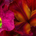 Eye to Iris by milaniet
