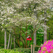 My Dogwoods Showing Off  by lesip