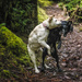 Best Buddies On the Trail