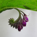 Comfrey by Cherrill