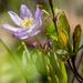 Anemone Purple Portrait