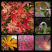 My  favourite pictures in a collage - leaves