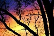 22nd Apr 2017 - sunrise silhouettes