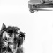 Cat Vs Faucet