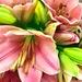 Dearest Lily... by gardenfolk
