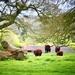 Rural Lincolnshire  by carole_sandford
