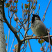 Spring Song by seattlite