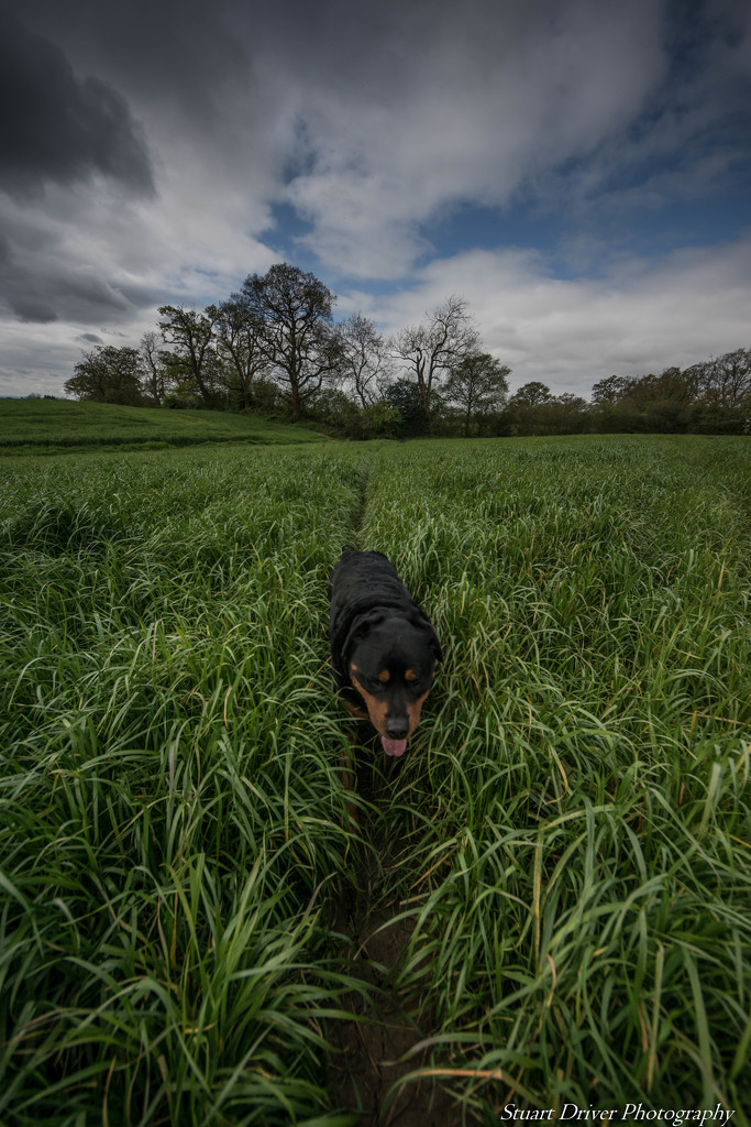 Pushing through the long grass by pasttheirprime