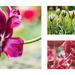 t-t-t-tulips by pistache