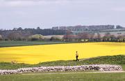 18th Apr 2017 - Fields of Yellow......