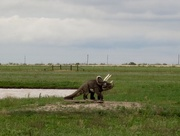 22nd Apr 2017 - When was the last time you saw a Chasmosaurus on the plains  of West Texas?