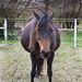 32 days till foal time