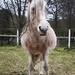 83 days till foal time