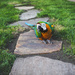 Parrot on a New Path by lyndemc