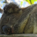 sleeping beauty by koalagardens