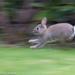 Bunny race