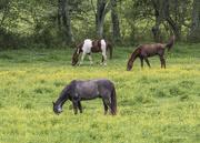 25th Apr 2017 - Horses enjoying a buffet of food.