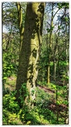 26th Apr 2017 - The shadows of the leaves on the tree trunk caught my eye!