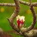 Tulip  by seattlite