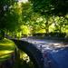 Late Evening Leafy Lane