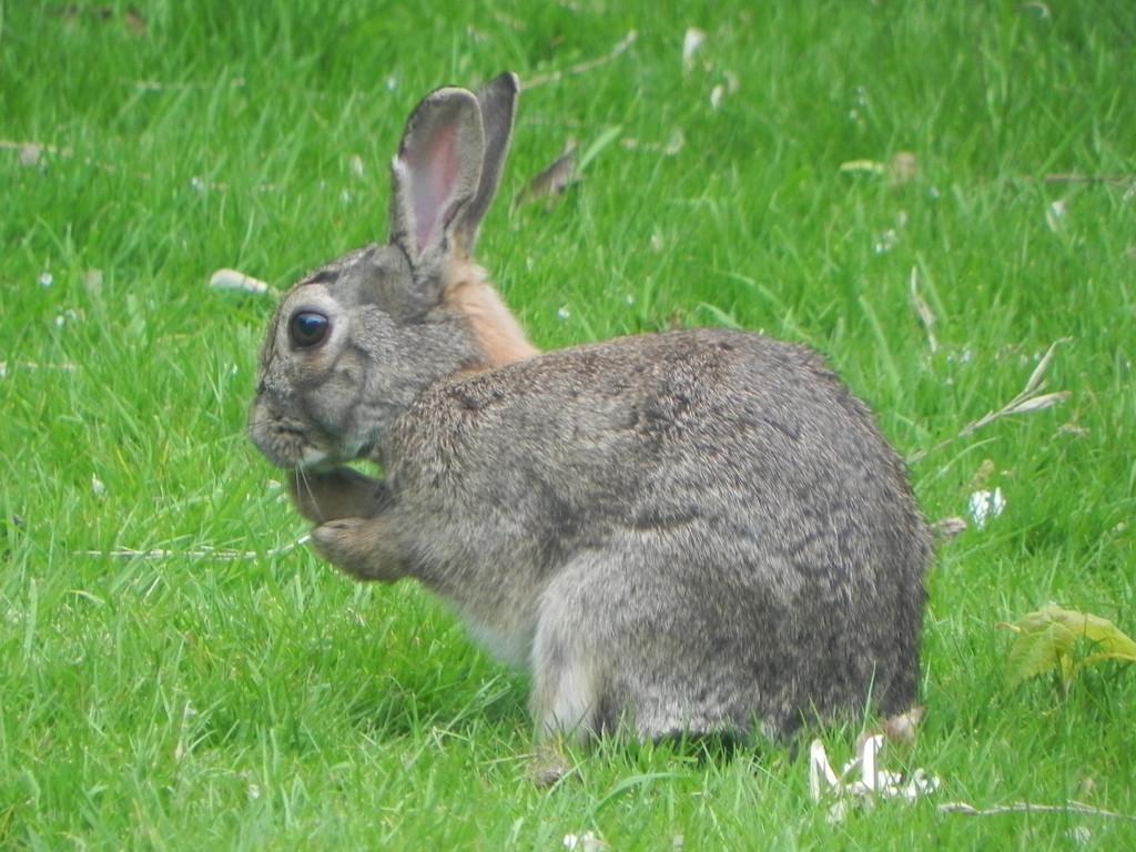 Rabbit by josiegilbert