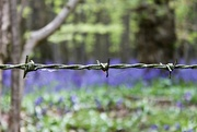 24th Apr 2017 - Barbed wire