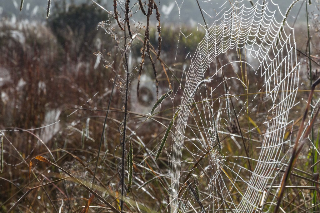 Field of webs by pusspup