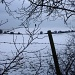Bare Branches and Barbed Wire by helenmoss