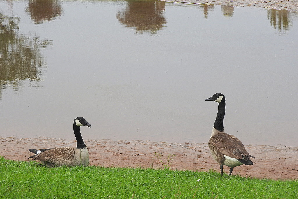 Where did our pond go? by homeschoolmom