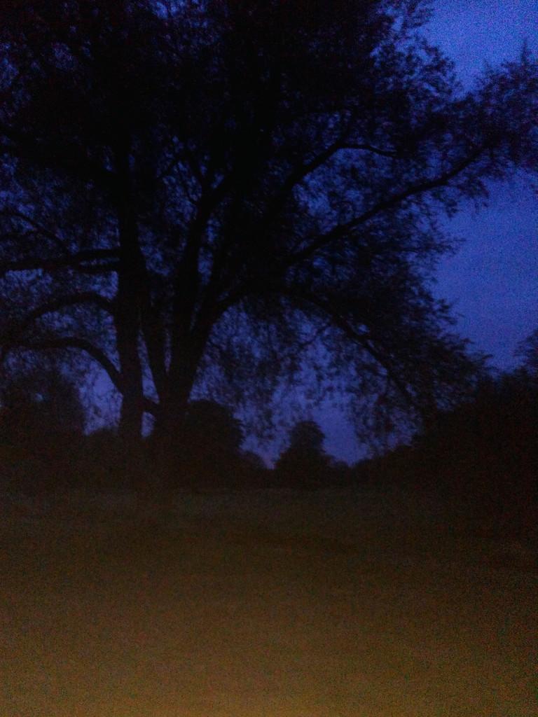 Strange Night and Flashlight by bulldog