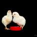 Be The Parakeet