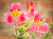 28th Apr 2017 - Backyard Flowers