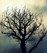 27th Dec 2010 - Tree Silhouette