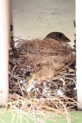 1st May 2017 - nesting
