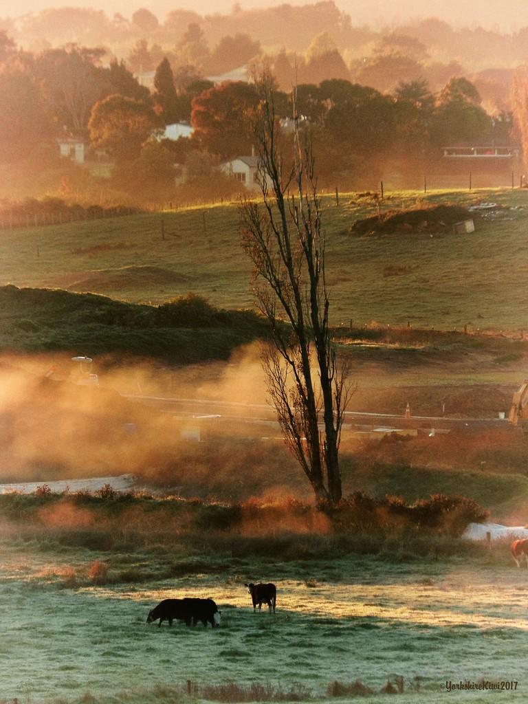 Autumn mist by yorkshirekiwi