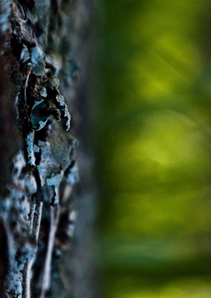 lichen and grass by annied