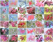 30th Apr 2017 - April Blossoms