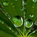 Macro Rain Drop by dianen