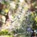 Happy Springtime! by blueberry1222