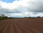 28th Apr 2017 - Potato field