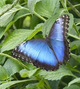 3rd May 2017 - Magestic blue!