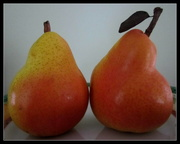 5th May 2017 - Pair of now ripe  Pears