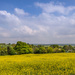 PLAY May - Sony 16mm f/2.8: Colorwheel Countryside by vignouse