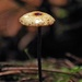 Tiny toadstool by maureenpp