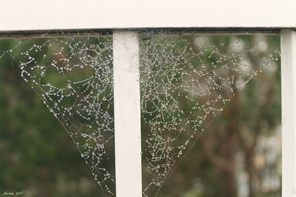 Spider Webs and Droplets by harbie