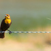 Bird on a Wire by 365karly1