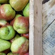 6th May 2017 - Pears