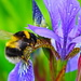 Eden Bee by phil_sandford