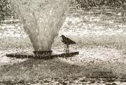 17th Apr 2017 - Bird Bath?